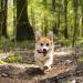 CBD til kæledyr hos Natures-Help