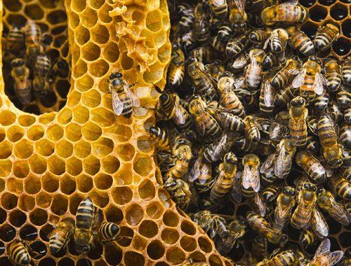 Biernes betydning for naturen - Natures-Help
